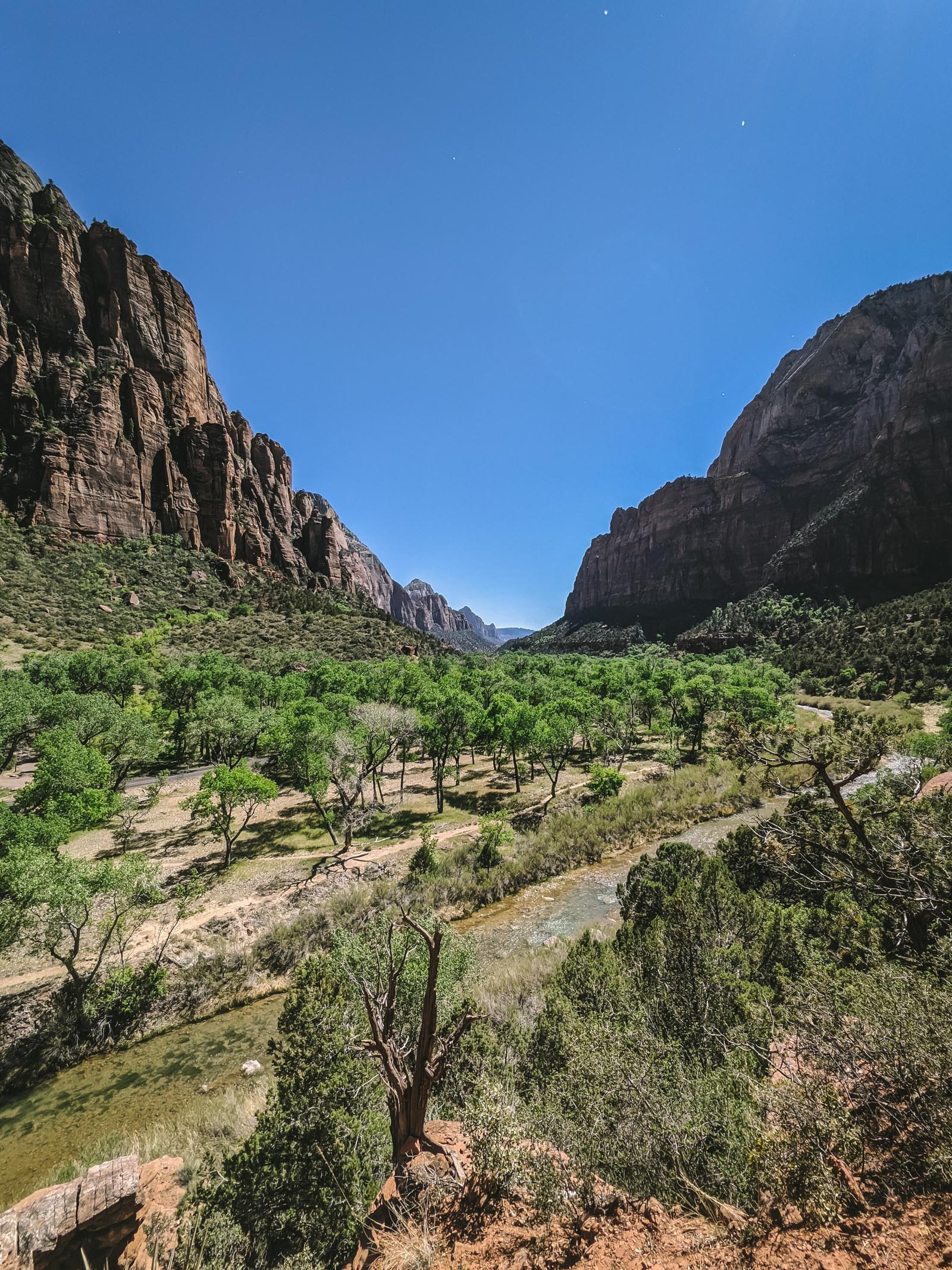 View from the Kayenta trail in Zion National Park | Go Messy or Go Hungry